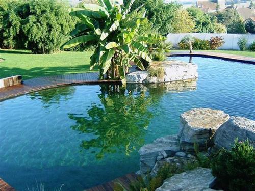 Piscinas naturales c mo hacer piscinas ecol gicas for Como hacer una piscina ecologica